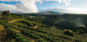 Coffee-farm bird eye view